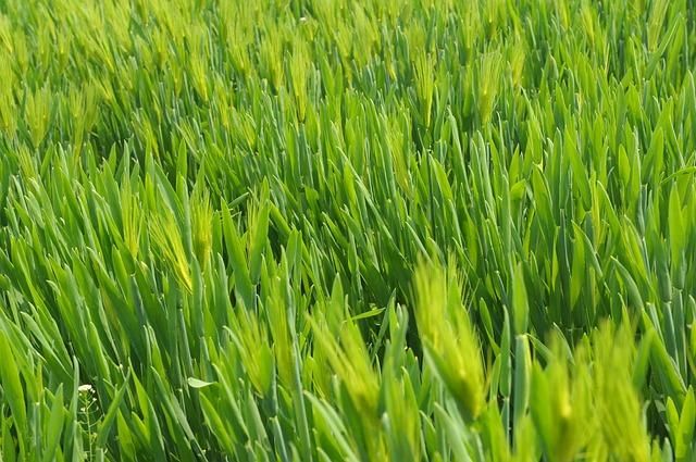 המדריך השלם לבחירת מכסחת דשא