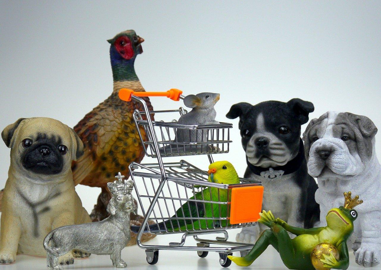 חנות בעלי חיים